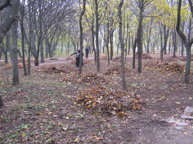 Мариупольцы  массово вышли на борьбу с опавшей листвой (ФОТО), фото-4