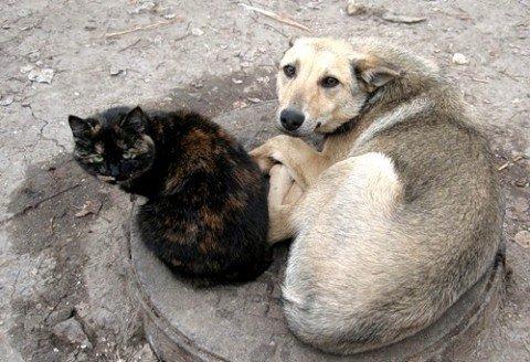 В Мариуполе любители животных собирают кости и одеяла в помощь бездомным собакам и кошкам, фото-1