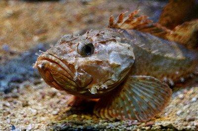 Азовское море на грани рыбной катастрофы. Из 17 промысловых видов рыб осталось три, фото-1