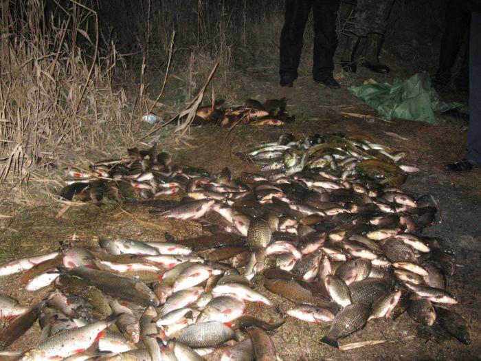 В Талаковке пресекли деятельность  мариупольского браконьера, который нанес ущерб водному хозяйству  более  чем на 6 тысяч гривен (ФОТО), фото-1