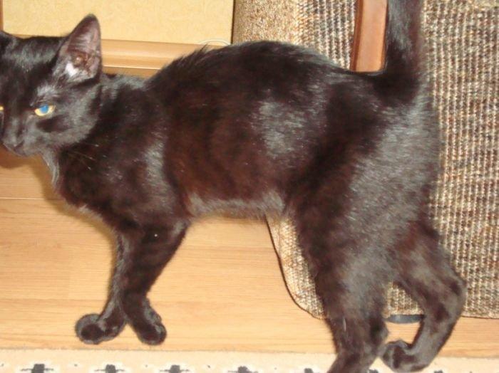 В Мариуполе котенок три дня провел на дереве, пока не высмотрел себе хозяйку (ФОТО), фото-2