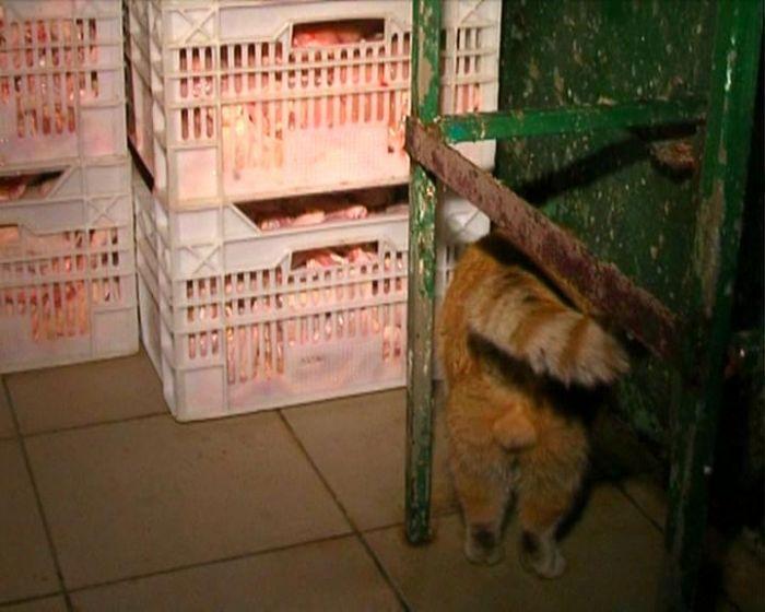 СБУ и милиция изъяли 5 тонн «формальдегидных» кур и задержали их владельцев ( ФОТО), фото-2