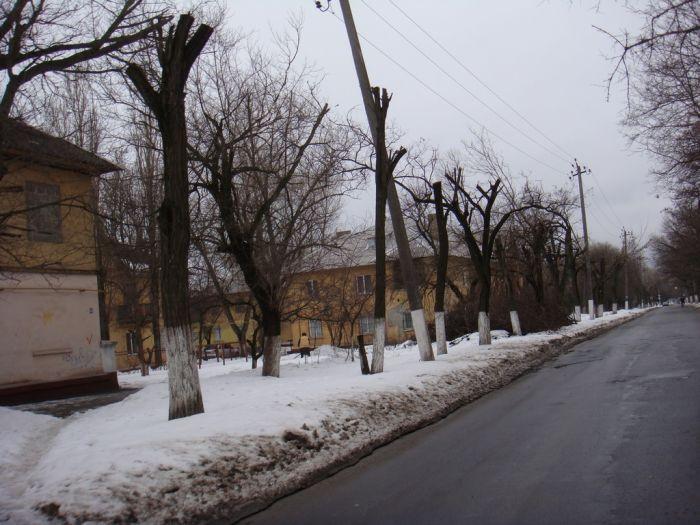 деревья 3