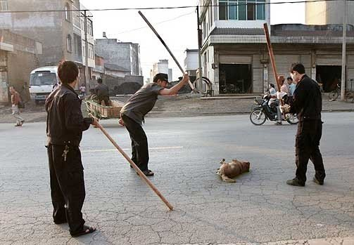 Гражданская война в Украине: люди против собак, фото-1