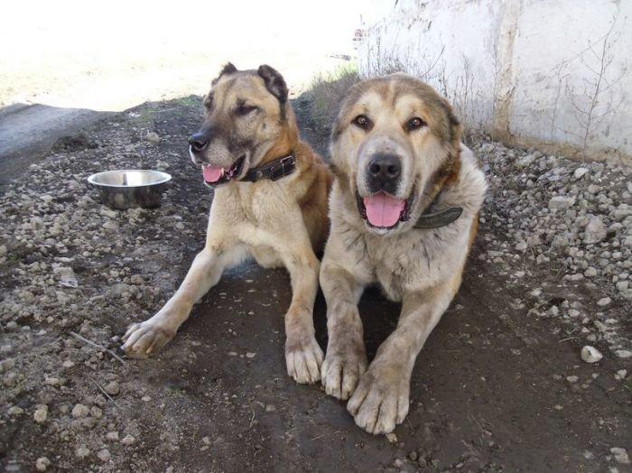 В Мариуполе измученная голодом собака Бара пошла на поправку (ФОТО+ВИДЕО), фото-2