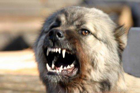 В Мариуполе 6-летнего мальчика искусала соседская собака, фото-1