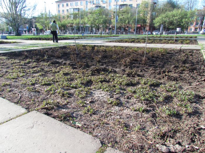 В Мариуполе  «дело вытоптанных газонов» прекращено (ФОТО, документ), фото-5