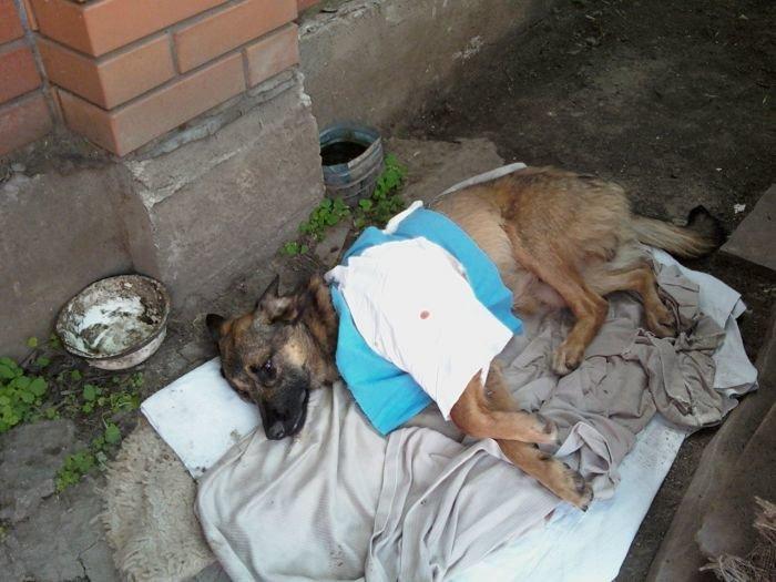 В Мариуполе неизвестный ранил пса свинцовой пулей (ФОТО), фото-1