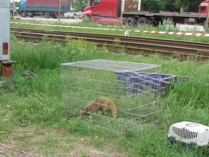 В Мариуполе обнаружили труп администратора цирка (ФОТО), фото-5