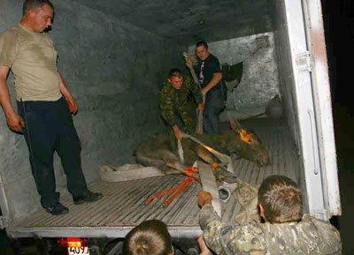 Из Донецка эвакуировали диких животных (ФОТО), фото-2