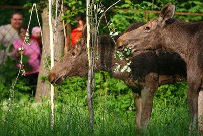 Из Донецка эвакуировали диких животных (ФОТО), фото-1