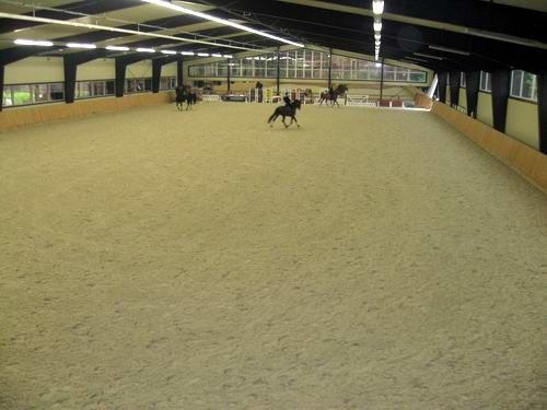 В Донецке пройдут международные соревнования по конному спорту (ФОТО), фото-3