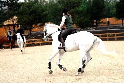 В Донецке пройдут международные соревнования по конному спорту (ФОТО), фото-1