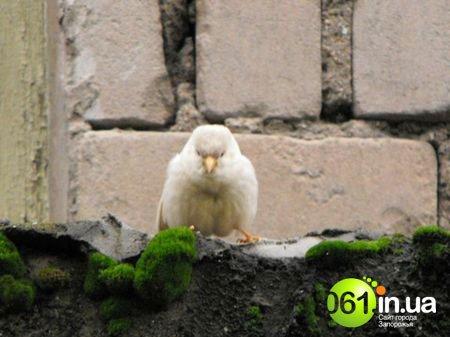 Сенсация! На Донетчине живет уникальный воробей-альбинос, фото-2