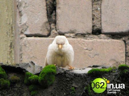 Сенсация! На Донетчине живет уникальный воробей-альбинос (ФОТО), фото-2