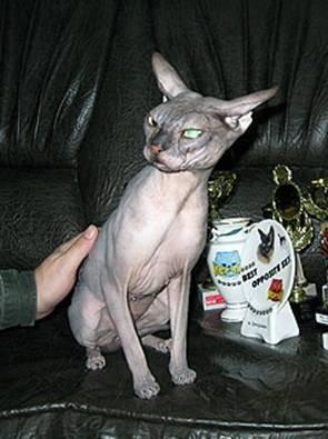 Самый-самый кот живет в Запорожье! (ФОТО), фото-1