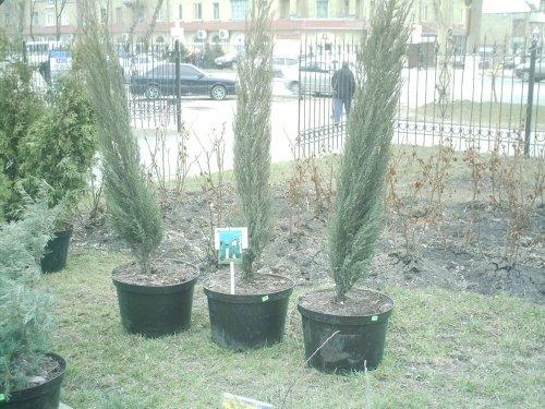 В Луганске открылась «Зеленая ярмарка», фото-2