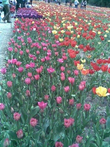 В Крыму открылась выставка тюльпанов, фото-4