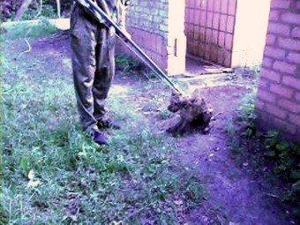 На Луганщине дворняга целую неделю жила в выгребной яме (фото), фото-1