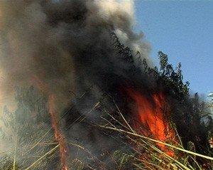 В Донецке ликвидировали 25-тысячный лес 3-метровой конопли, фото-1