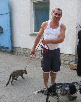 Французский укротитель оставил в Ялте двух тигров взамен на непоседу-леопарда (ФОТО), фото-2