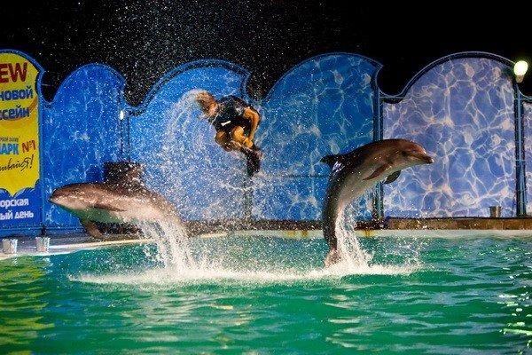 В Ялте оперный певец Гришко провел шоу c морскими животными (ФОТО), фото-2