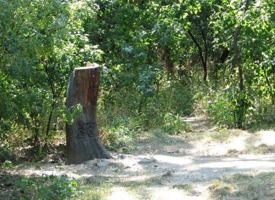 На Хортице спалили и изувечили языческие святилища (ФОТО), фото-1