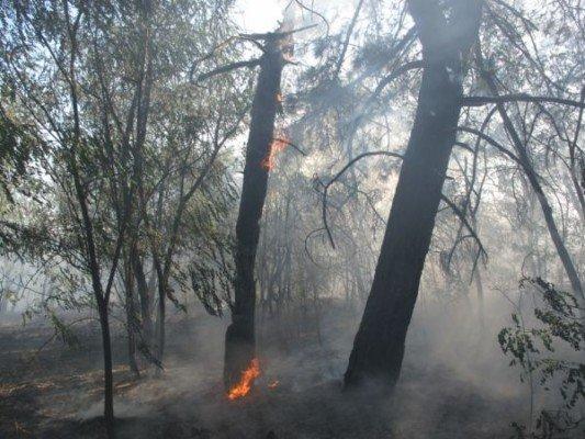 В поселке Каневское на выходных горел лес (ФОТО), фото-1