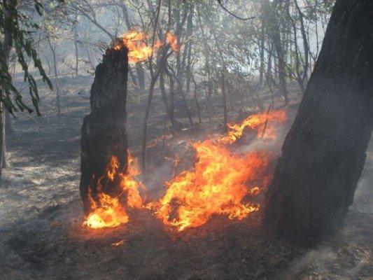 В поселке Каневское на выходных горел лес (ФОТО), фото-2