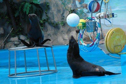 С понедельника дельфинарий начнёт утепляться (ФОТО), фото-2