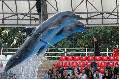 С понедельника дельфинарий начнёт утепляться (ФОТО), фото-3