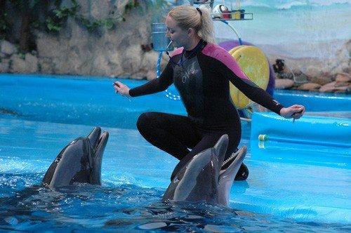 С понедельника дельфинарий начнёт утепляться (ФОТО), фото-1