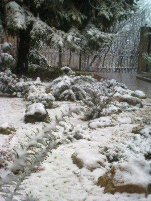 Сегодня в Симферополе выпал первый снег(ФОТОФАКТ), фото-3