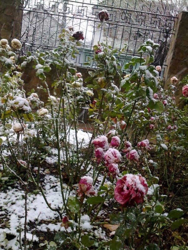Сегодня в Симферополе выпал первый снег(ФОТОФАКТ), фото-4