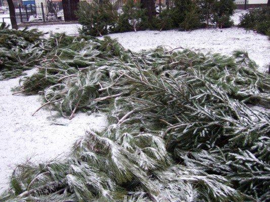Грустная судьба донецких елок (фото), фото-1