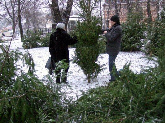 Грустная судьба донецких елок (фото), фото-3