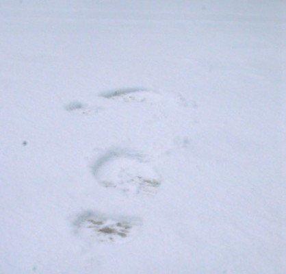 Симферополь засыпало снегом. Коммунальщики, как всегда, оказались не готовы (ФОТО), фото-1