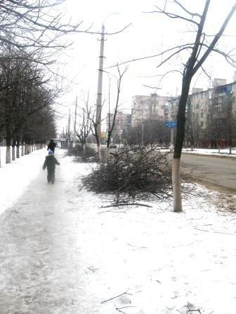 Теперь деревья в Горловке не будут расти хаотично, фото-1