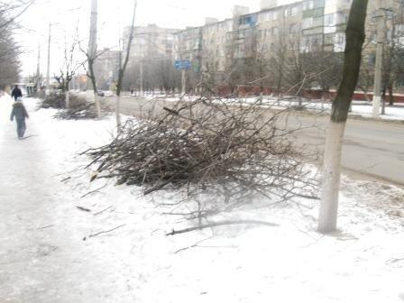 Теперь деревья в Горловке не будут расти хаотично, фото-2