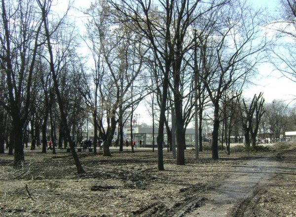 Что происходит в Харькове со сквером на площади Восстания (ФОТО), фото-3