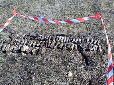 В Луганской области обнаружены минометные мины (фото), фото-1