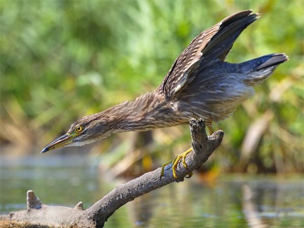 В кадре - птицы и ночной Кривой Рог, фото-1