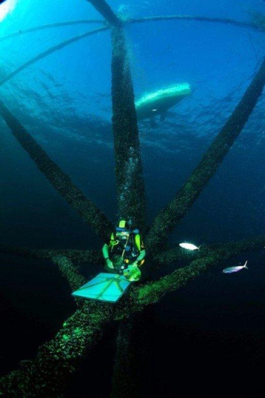 В Ялте покажут картины и фото, сделанные под водой (ФОТО), фото-2