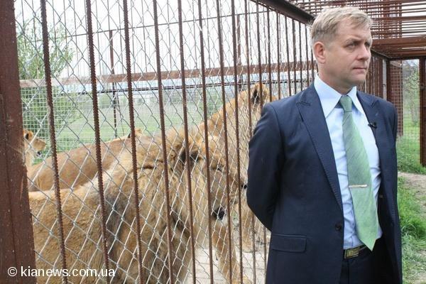 В крымском сафари-парке из вольеров выпустили 15 львов (фото), фото-3