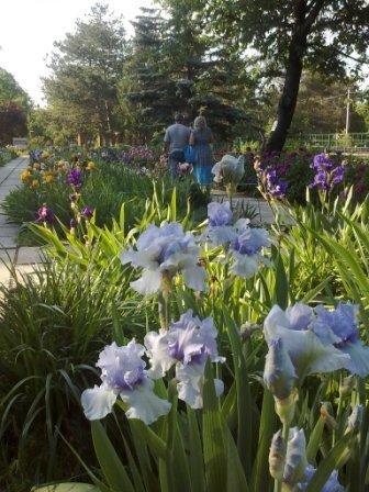В Ботаническом саду благоухает около 200 видов роз (фотофакт), фото-1