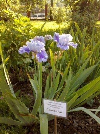 В Ботаническом саду благоухает около 200 видов роз (фотофакт), фото-2