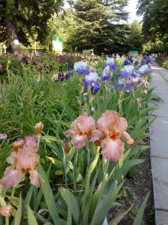 В Ботаническом саду благоухает около 200 видов роз (фотофакт), фото-3