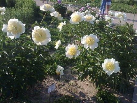 В Ботаническом саду благоухает около 200 видов роз (фотофакт), фото-4