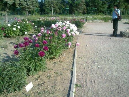 В Ботаническом саду благоухает около 200 видов роз (фотофакт), фото-6