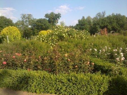 В Ботаническом саду благоухает около 200 видов роз (фотофакт), фото-7